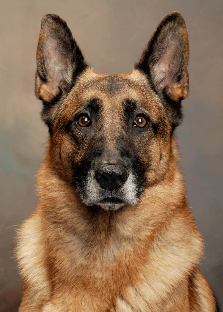 Kennel Club Dog Trainer Training